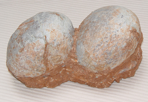 Hadrosaurus Eggs in Nest