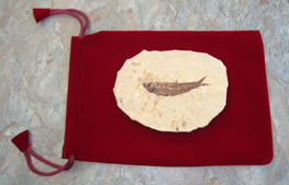 Fossilised Fish - gift