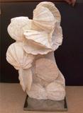 Column of Fosilised Pecten