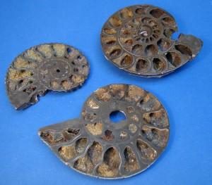 Drusy Rainbow Pyritised Ammonites