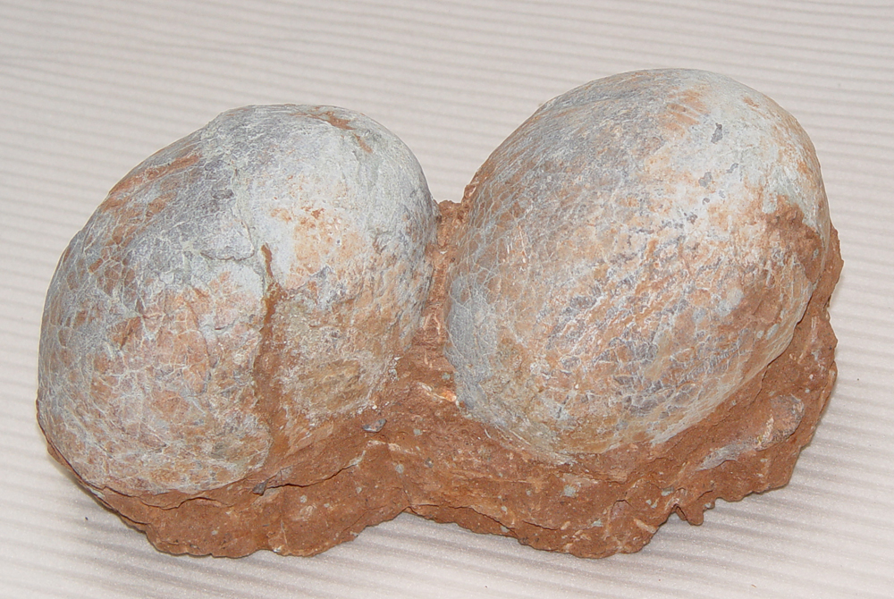 Christmas Present Dinosaur Eggs in Nest