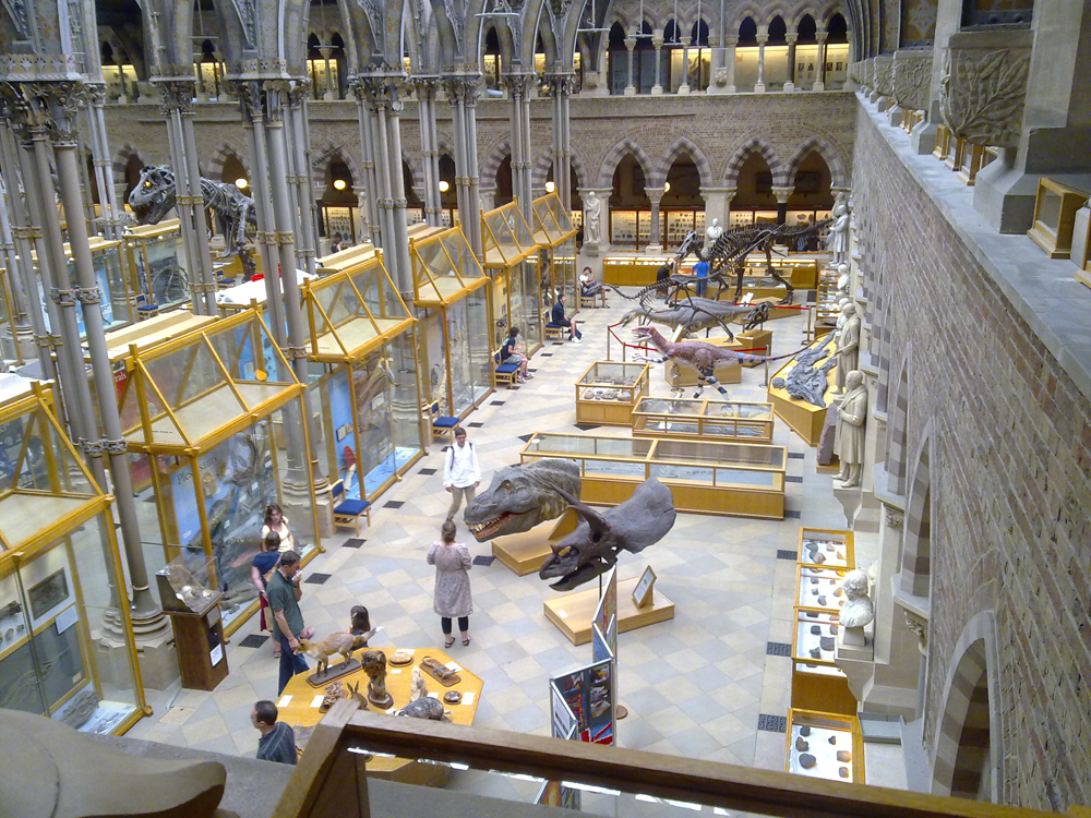 A portion of the ground floor displays at the Oxford Museum of Natural History by Ozeye
