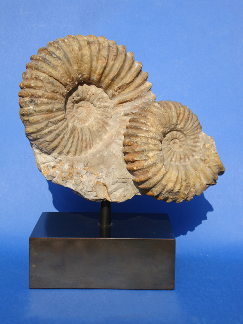 Large Double Ammonite Mounted on a Bronze Plinth