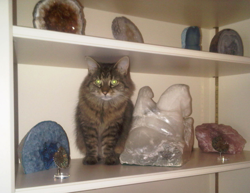 Misa at home in amongst the fossil and mineral ornaments