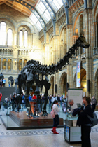 The Natural History Museum - Fossils