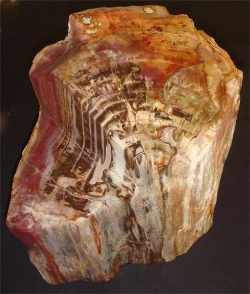 Natural Petrified Wood Fossil Trunk