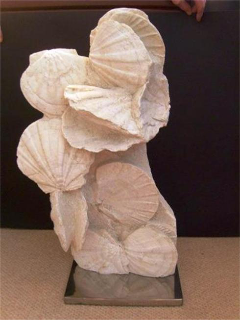 Pecten Fossilised Shell Column