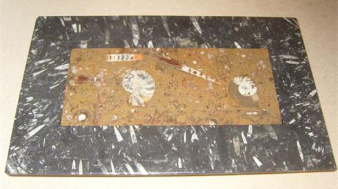 Goniatites in a fossil mosaic table top