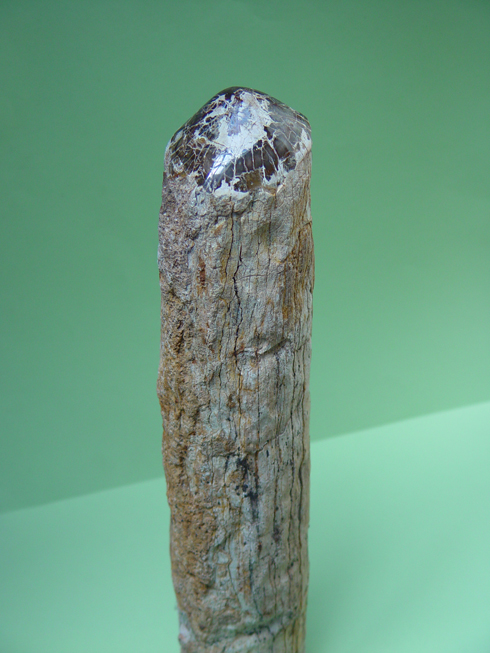 Fossilised (Petrified) Wood Log