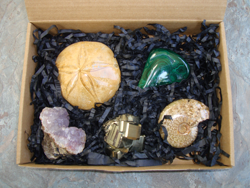 Fossil and Mineral Collectors Starter Gift Package