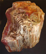 Petrified Natural Wood Fossil Trunk