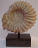 Whole Moroccan Single Mounted Ammonite